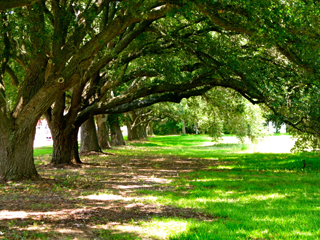 League City is known for