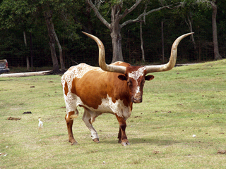 League City